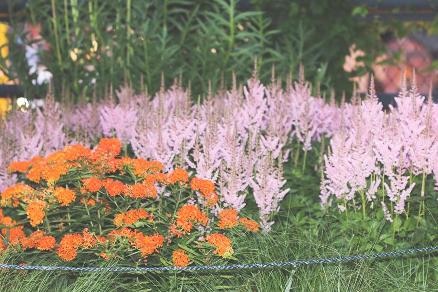 High line flowers flores da Highline nyc